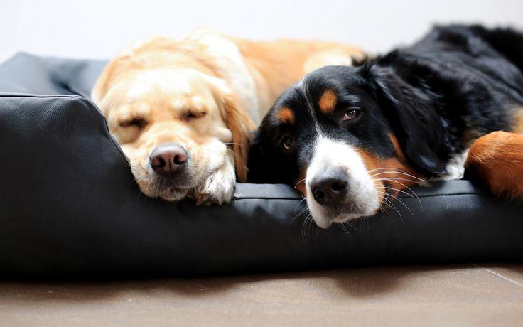 Oltre 25 fantastiche idee su articoli per cani su for Articoli per cani