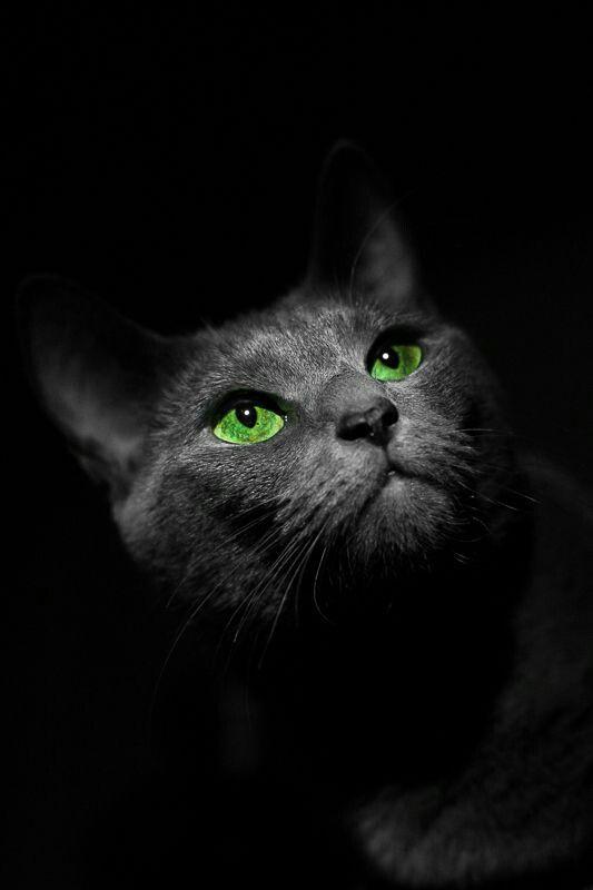 Картинки черного кота с зелеными глазами