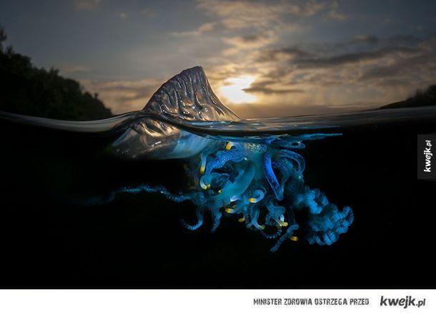 Niesamowite zdjęcia zrobione w połowie pod wodą