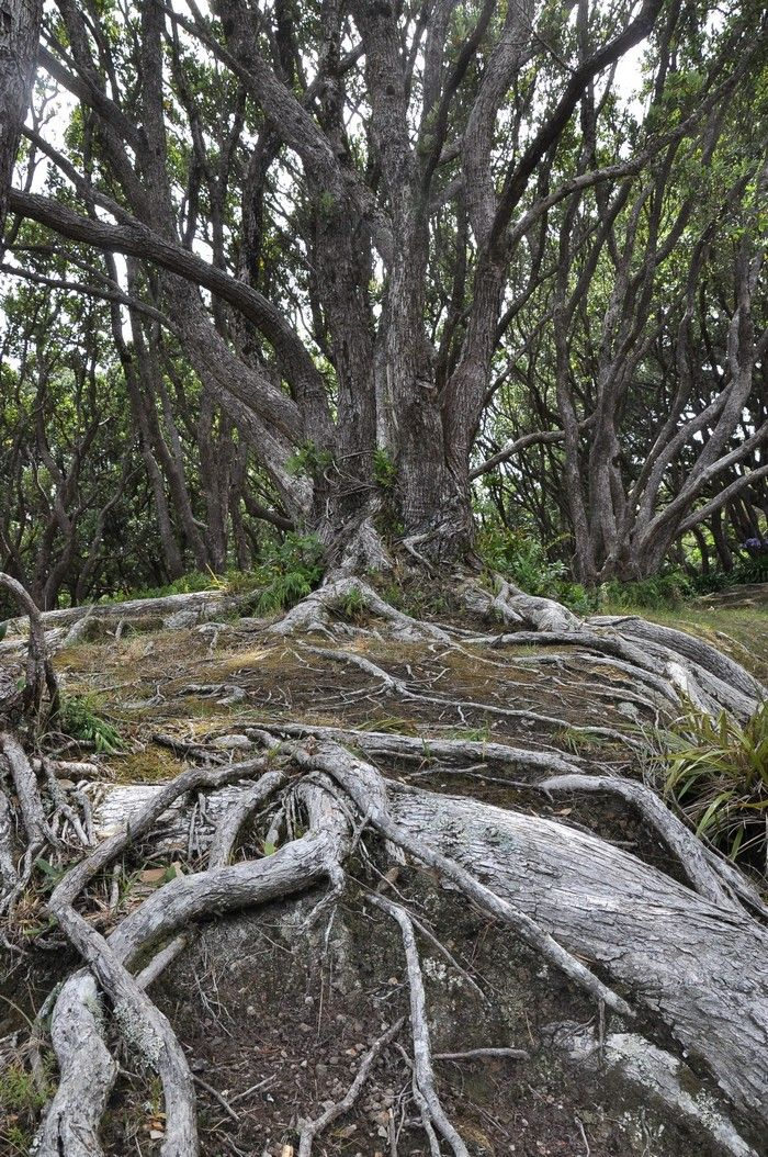 Wellington- Botanic Garden