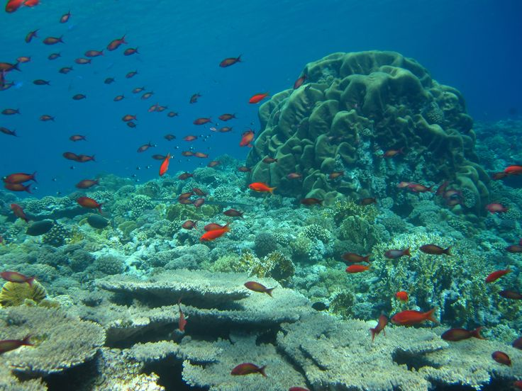 Beautiful and healthy Daedalus reef in Red Sea - June 2014 #WEPAreef #WEPAfish #WEPAdaedalusreef