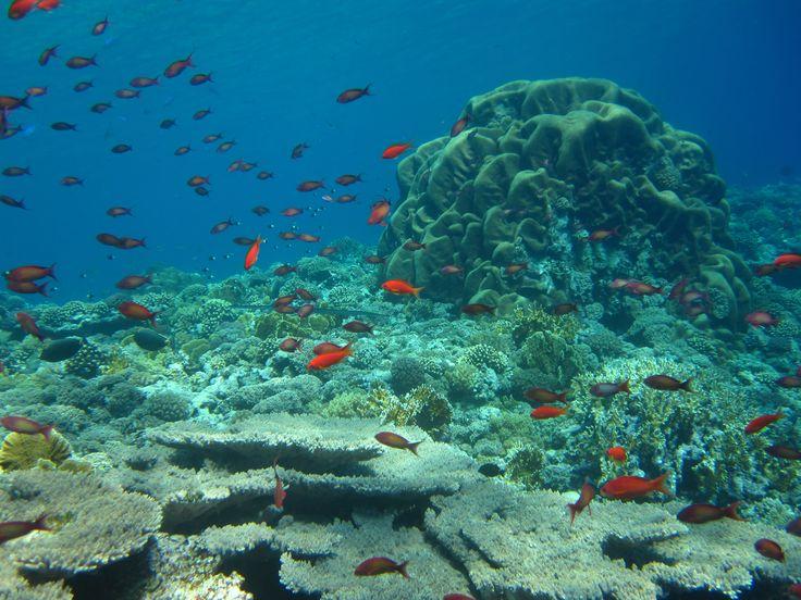 Beautiful and healthy Daedalus reef in Red Sea - June 2014 #WEPAreef #WEPAfish #WEPAdaedalusreef