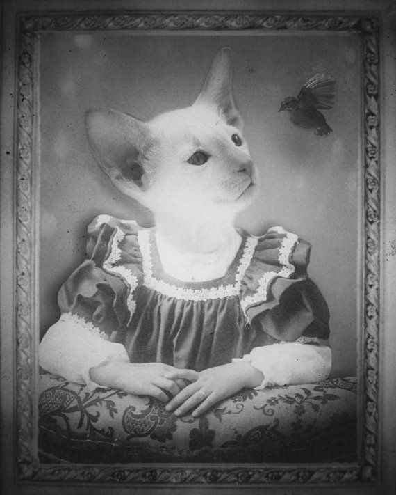 Cat Art  Quirky Pictures  Cat Photography  by Rockabelle3PhotoArt