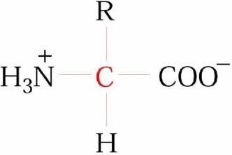 http://www.biyolojidersnotlari.com/biyokimya-amino-asitler.html Amino Asitler Amino asitler, yapılarında hem amino grubu (NH2) hem de karboksil grubu (COOH) içeren bileşiklerdir.  ..