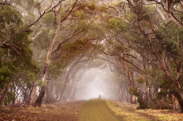 Gum Tree Lane by Hans Kawitzki, via 500px