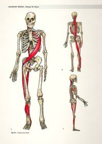 tensegrity and fascia - Google Search