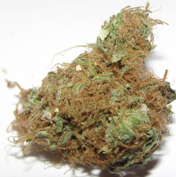 Critical + - HYBRID - Critical +, which is also known as Critical Plus, is an evenly balanced hybrid of the famed Skunk and Big Bud (50:50 sativa/indica ratio). Winner of the first High Life Cup competition in Barcelona, this strain has high THC levels, upwards of 20% in some tests, while CBD is less than 1%. www.allbud.com