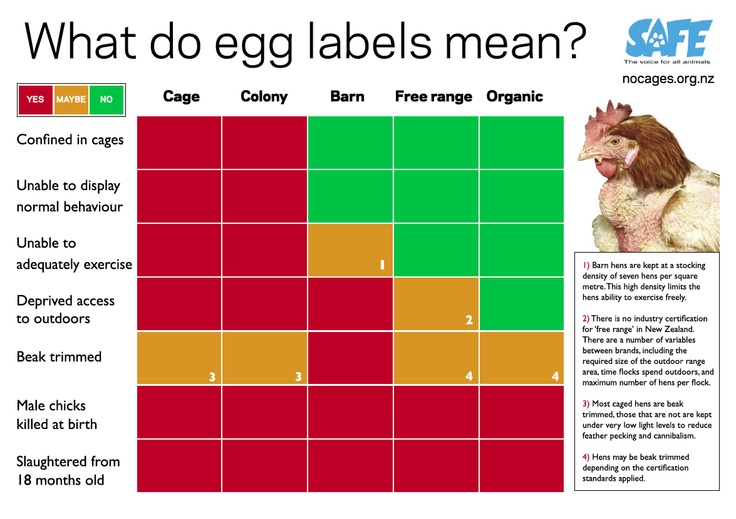 What do egg labels mean? Are free range hens really free? What's the deal with organic and barn eggs? Find out more: http://safe.org.nz/Campaigns/Battery-hens/Egg-Labels/