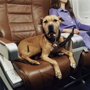 Are Emotional Support Dogs on Planes Causing a Backlash? | The Bark