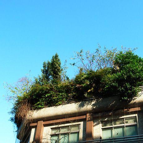 【明るい部屋】植物建築図鑑/樹木のティアラ A tiara of trees