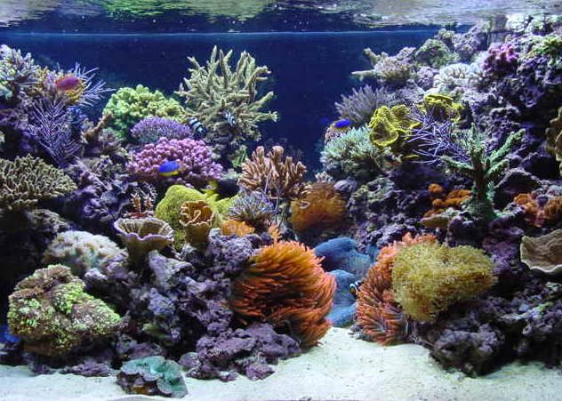 salt water aquarium | ... Aquascaping - Elaborate Saltwater Aquariums vs Zen Freshwater Tanks