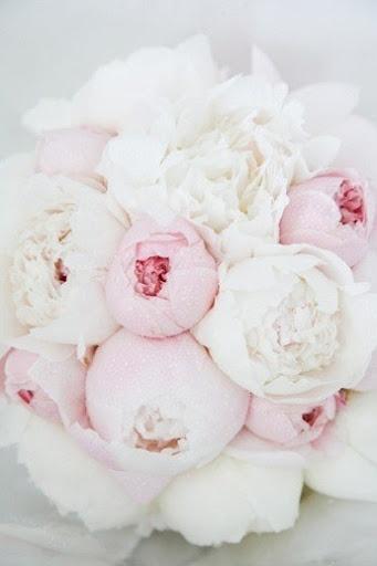 Pink and white. we ♥ this! davidtuteraformoncheri.com