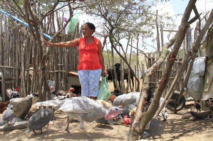 | Mulheres e agroecologia, a luta é todo dia | Ligória Felipe dos Santos é agricultora no semiárido brasileiro. Nasceu e se fez mulher numa comunidade rural, no município de Esperança, na Paraíba.
