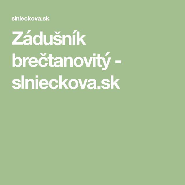 Zádušník brečtanovitý - slnieckova.sk