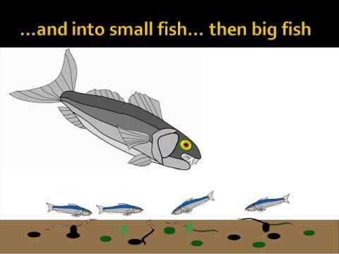 Bioaccumulation of Pollution in Waterways: Animation (April 2010)