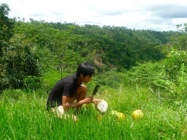 fresh coconut water - nature's rehydrator