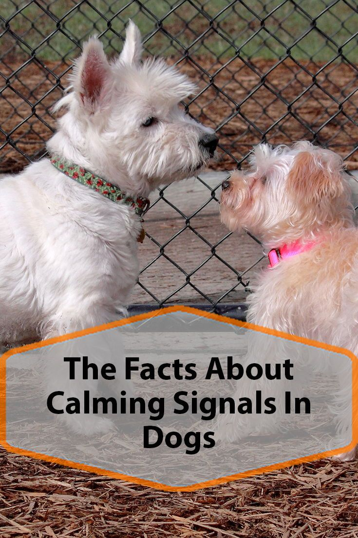 Calming Signals In Dogs Dogs Dog Behavior Dog Care