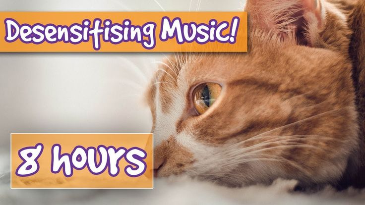 Desensitising Sound Healing Music For Cats Comfort Your Aggressive Cat Pet Therapy Sound Effects Youtube Pets Music Heals Sound Healing