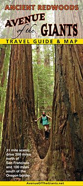 Avenue of the Giants in California was 26 miles of Redwood Trees.  There was so much to see and you wanted to pull over and see it all but you would be there for a month.