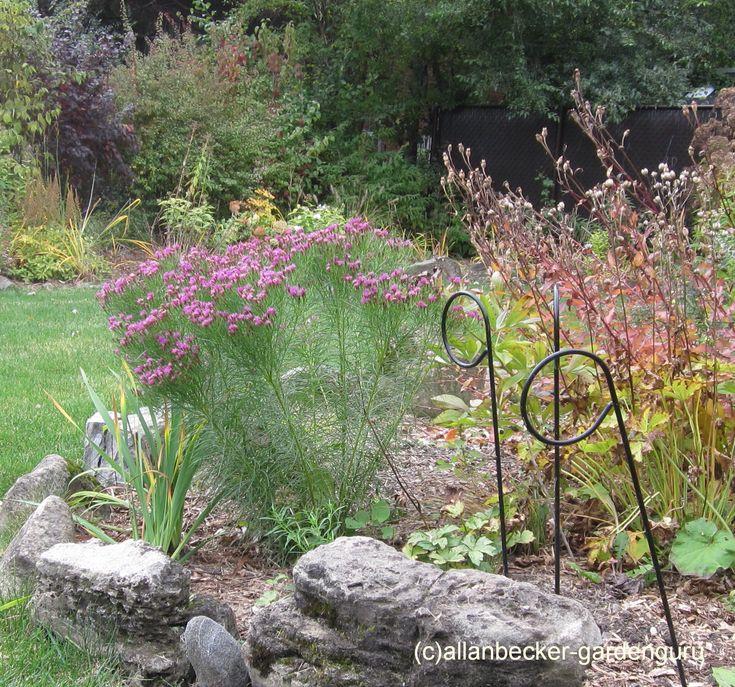 177 best garden perennials sun images on Pinterest Perennials