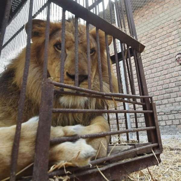 Murió el 80% de los animales retirados de los circos