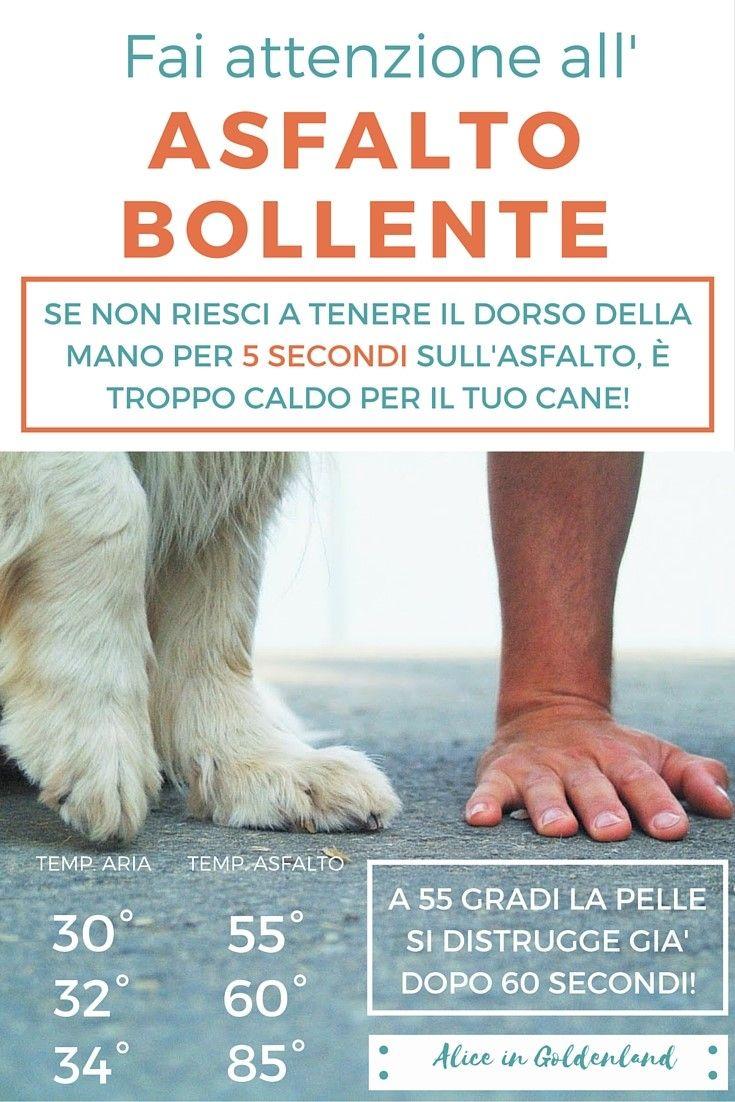 Ciao!In questo post ti spiego come curare il piede e i cuscinetti del tuo cane. Un articolo di Alice in Goldenland, allevamento di Golden Retriever.