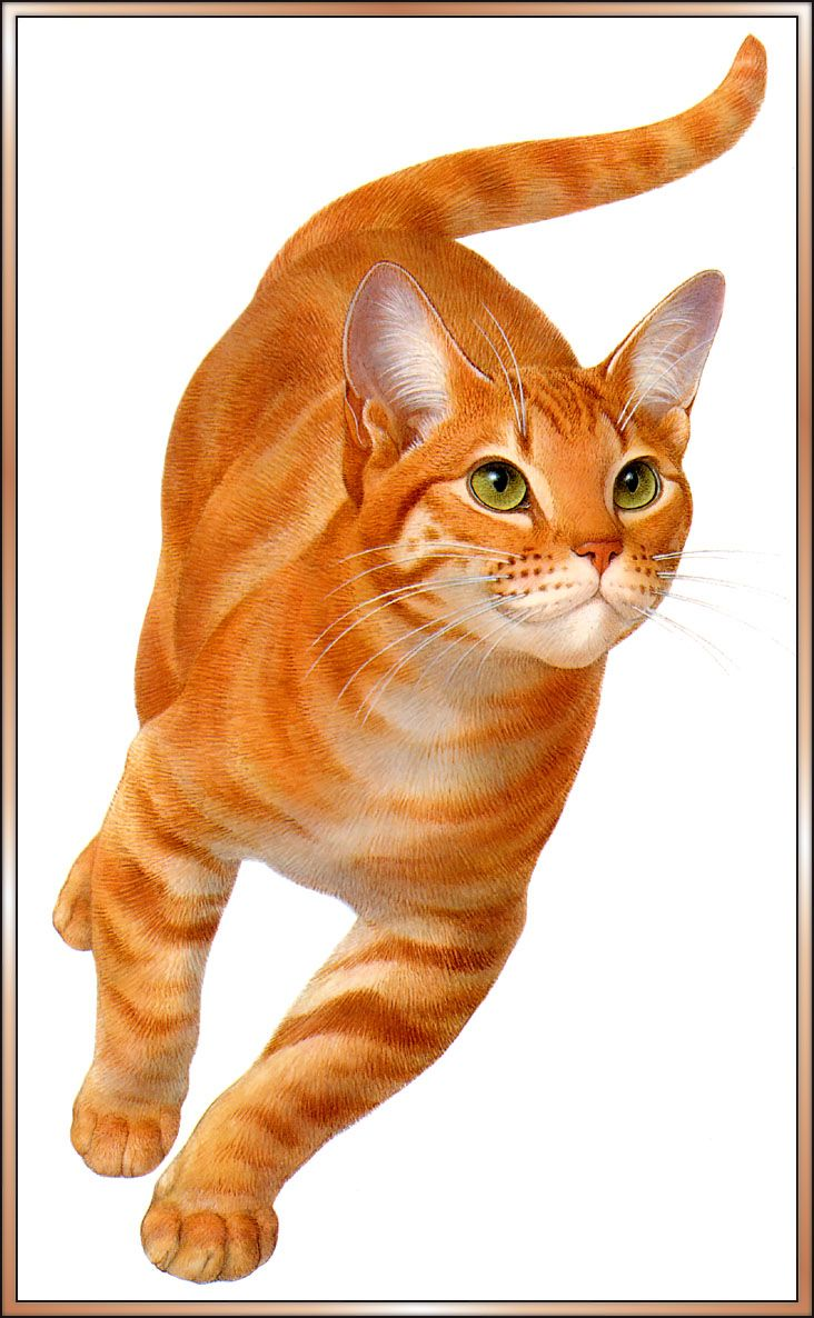 Yellow tabby, artist unknown