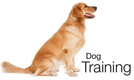 how to train your dog to listen