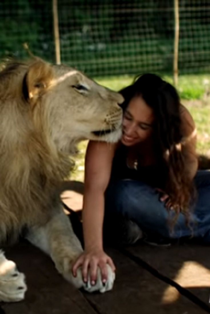 Image of: Petting Lions Treat Woman Like The Leader Of The Pride video lions woman leader pride wildlife Pinterest Lions Treat Woman Like The Leader Of The Pride video lions woman