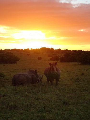 """""""Rhinos at Sunset"""" Student Photo in Port Elizabeth, South Africa"""