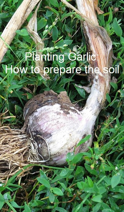 It's time to start thinking about planting the garlic you'll harvest next year. Here's how to prepare your soil.