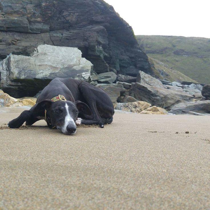 Knackered beach pooch