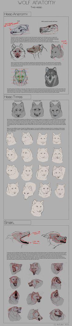 Wolf Anatomy - Part 1 by Autlaw on deviantART via PinCG.com