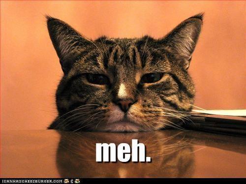 ....whateverLaugh Time, Post Cat, Funny Pics, Bored Meeting, Fun Stuff, Humor, Slow Death, Meh, Animal