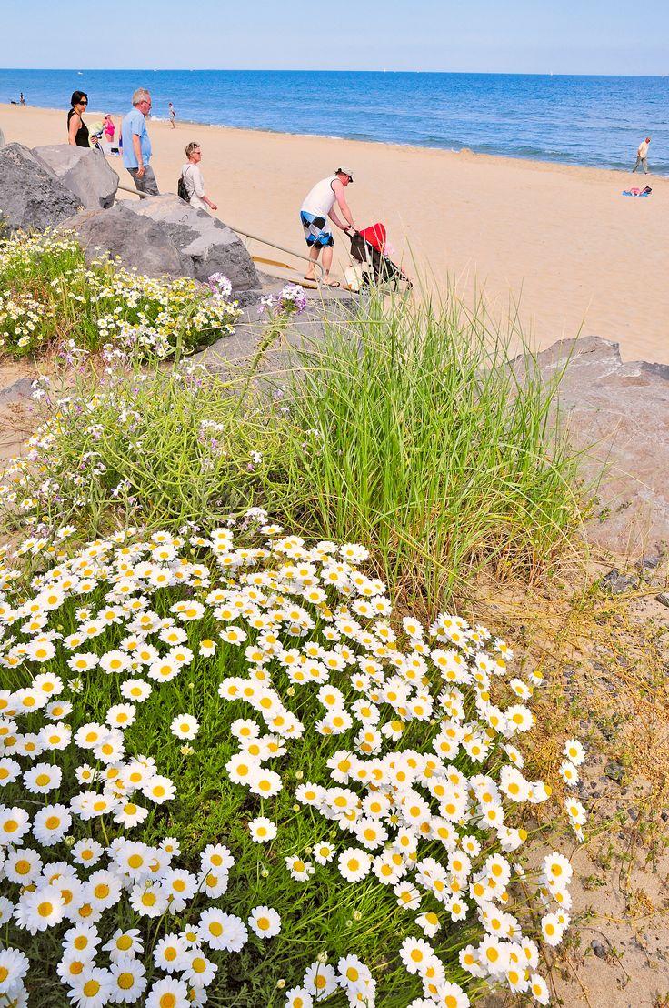 Plaże Langwedocji:  http://www.eurocamp.pl/campingi/francja/langwedocja-