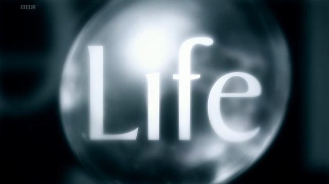 라이프 (Life, BBC, 2009) – 경이로운 생존과 번식 전략