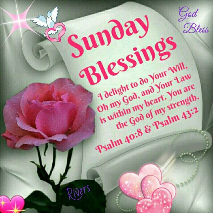1764 best good morning images on pinterest beautiful flowers buen sunday blessing psalm 408 and psalm 432 god bless psalm 43sunday quotesmorning prayerssunday morningchristian messagesphilippians 4amazing wordsbible m4hsunfo Images