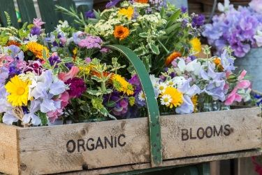 Natural seasonal, organic, wild flowers for weddings and special events