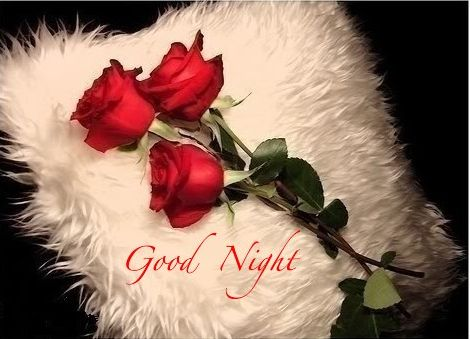 Good night Red rose  & pillow