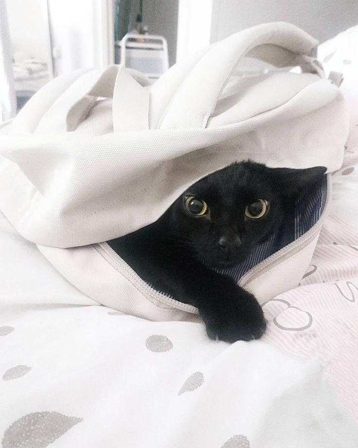 Cześć Rebko idziesz ze mną na uczelnię? Bo trochę tam wyglądasz. #kot #kotrebel #cat #catslover #catstagram #czarnykot #blackcat #kotek #w #plecaku #backpack #backtouni #biały #plecak #blackandwhite #wyprawka #photooftheday #instagirl #polishcat #blog #blogerka