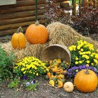 Use natural products. When decorating for fall, use natural products such as hay bales, pine cones, straw and brightly colored leaves. Stack a bale of hay in a section of your yard, and sprinkle your pine straw around it. Add leaves to your display by placing them on top of the hay and straw in a fashion that would seem as if they had fallen...