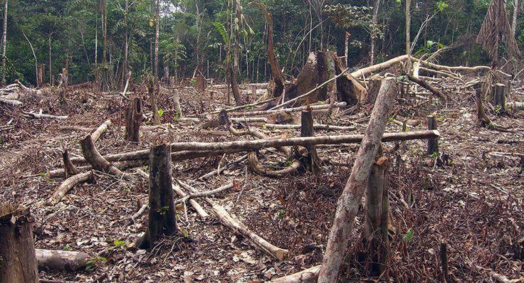 Deforestación en Colombia. WWF: mitad de los ecosistemas de Colombia está en riesgo. 17/11/17