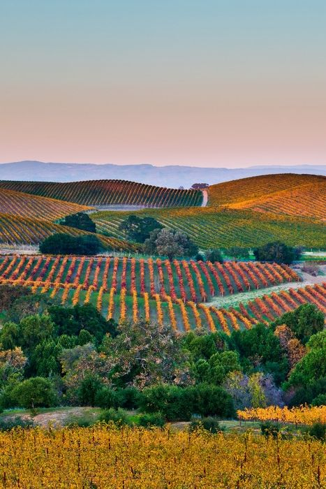 Take a hot air balloon tour and see wine country like never before during your stay at Hyatt Vineyard Creek Hotel and Spa.
