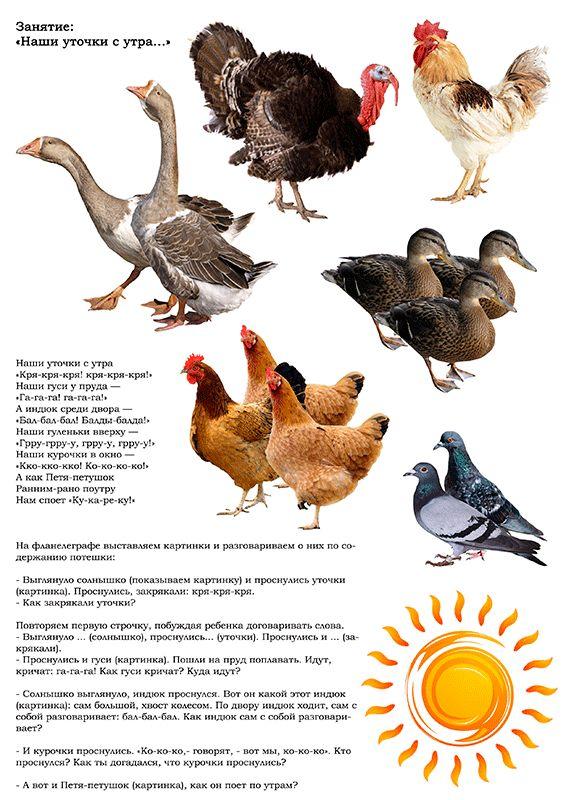тематическая неделя домашние птицы