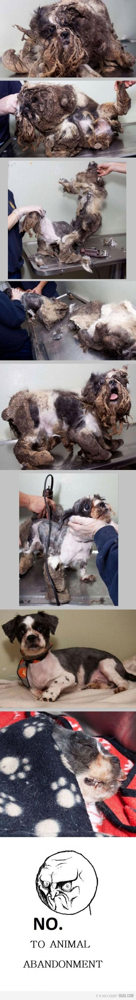 This is this dogs first haircut. You have to double click to get to see it up close. At first I wasn't sure what had happened to this poor little guy.