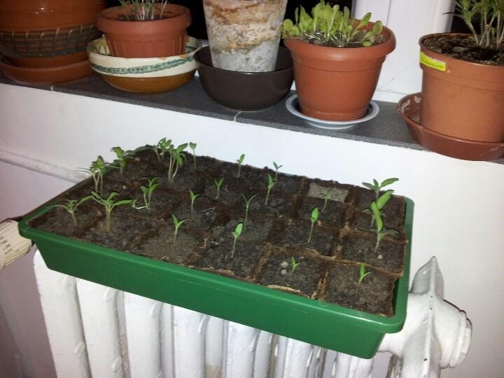 Beginnings of an apartment garden