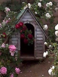 .Honden hokje, voor in de tuin.