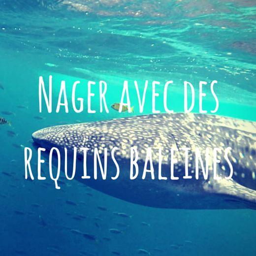 Nager avec des requins baleines