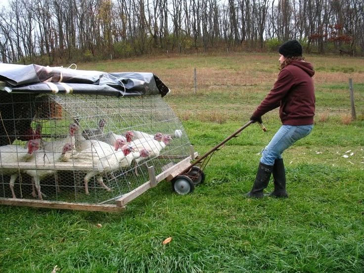 30 best turkey pens images on pinterest penne pens and for Moving chicken coop plans