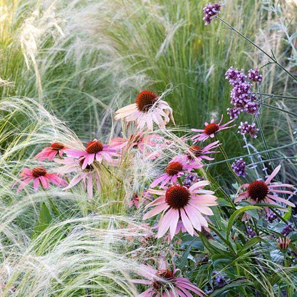 Buy Create a prairie plant combination Create a prairie 'plant combination': Delivery by Crocus